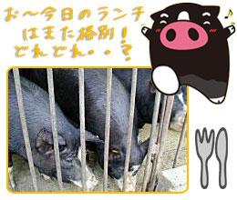霧島黒豚の食餌